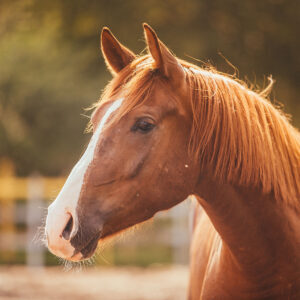 national-horse-day-300x300